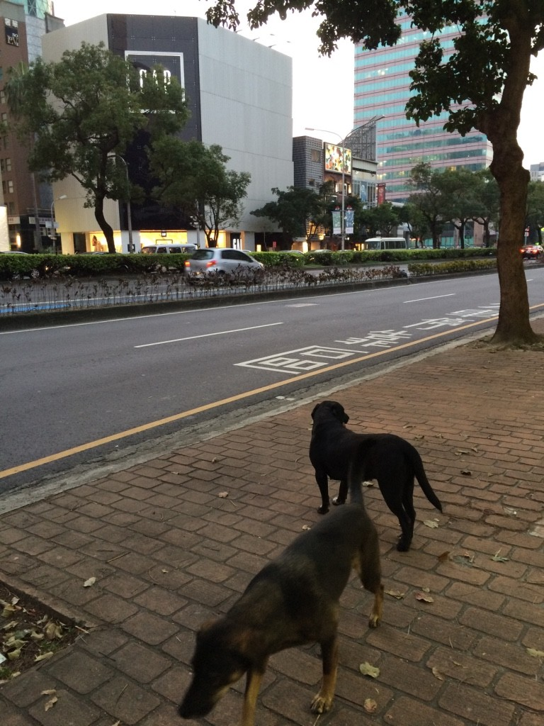 There are more strays here than in Taipei. But they all look very well taken care of and well groomed.