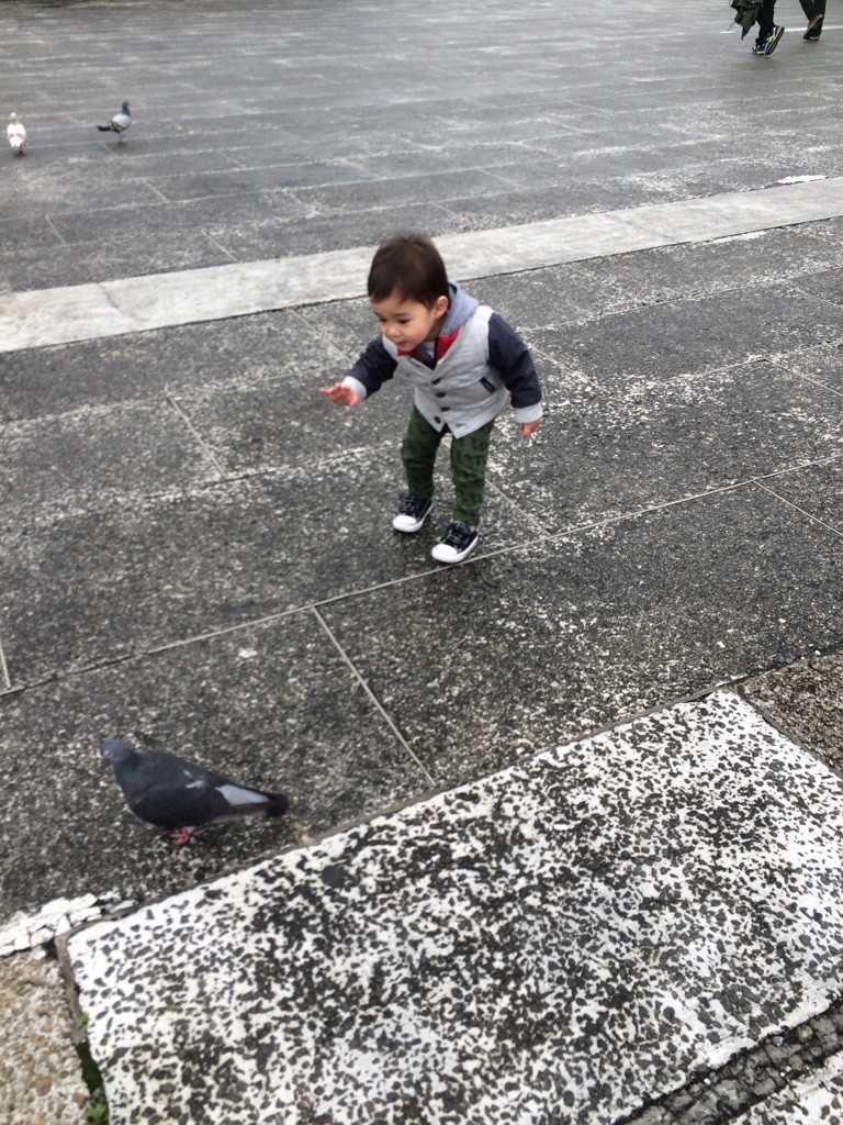 Hello, pigeons! Nate liked to chase them around the square saying hello