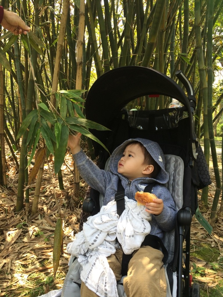 Nate in the bamboo forest