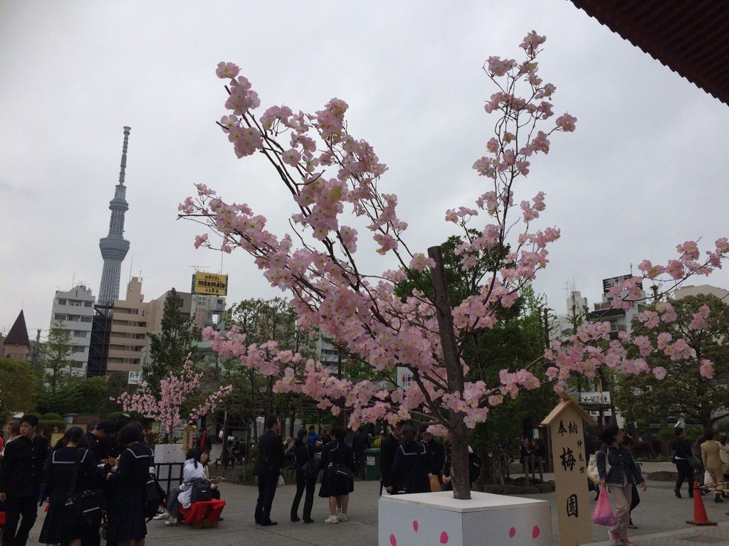 You can see Tokyo Skytree from the temple area. Those are fake blossoms but the tree is real.