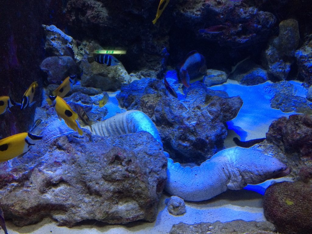 "Creepy white thing is a ""broadbanded moray"""