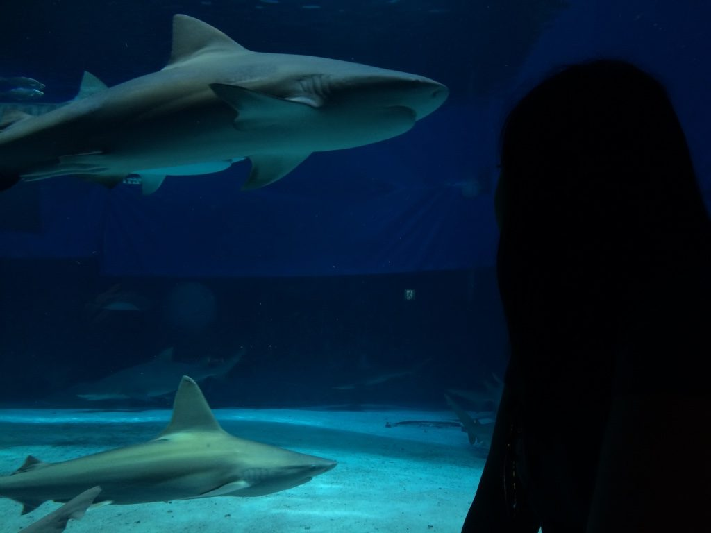 In the shark tank