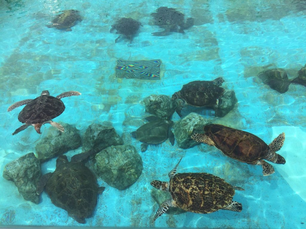 Pools of sea turtles