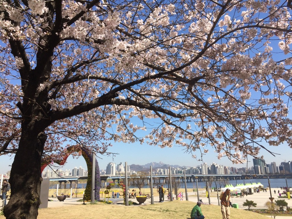 When we got out of the train station, we were greeted by blooming cherry blossoms and a nice view of central Seoul