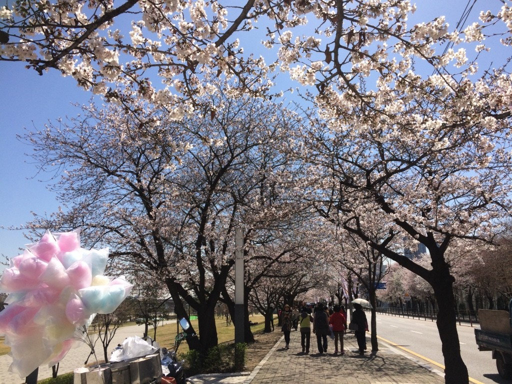 Cherry blossoms lined the outer walkways of the island. Cotton candy stalls were also abundant