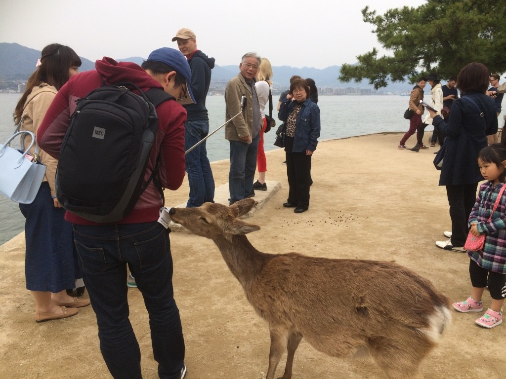This bratty deer took a train schedule pamphlet out of Tim's back pocket