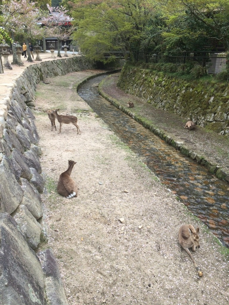 Deer just hanging out