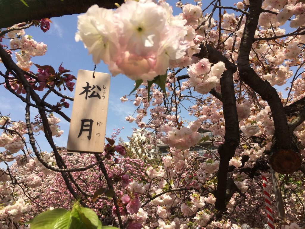Each tree was labeled, I'm guessing saying what type of blossom it was