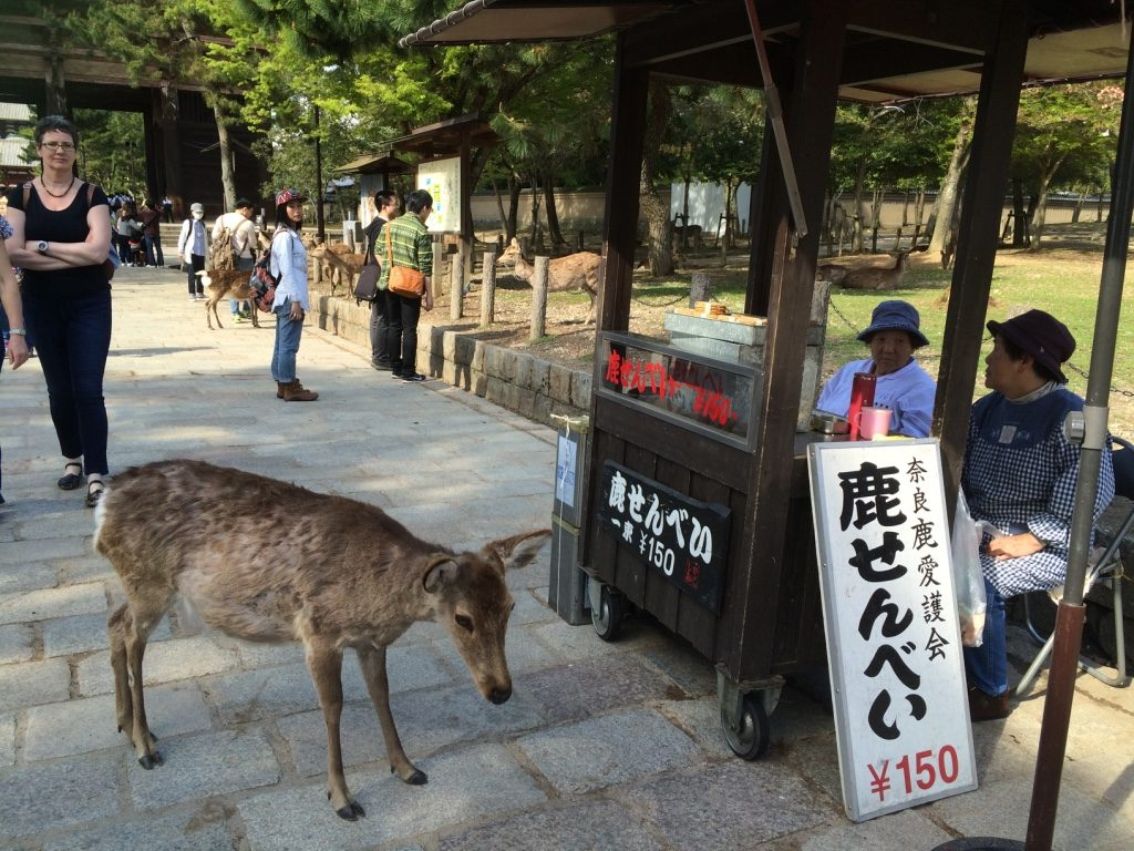 This deer is smart. Stands right by the food stand and just follows whoever is buying one.