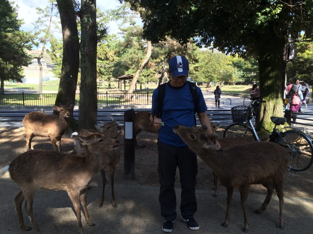 Tim feeding the deer was a much calmer and orderly experience