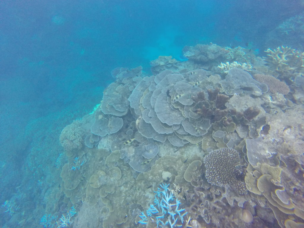 Table top reefs