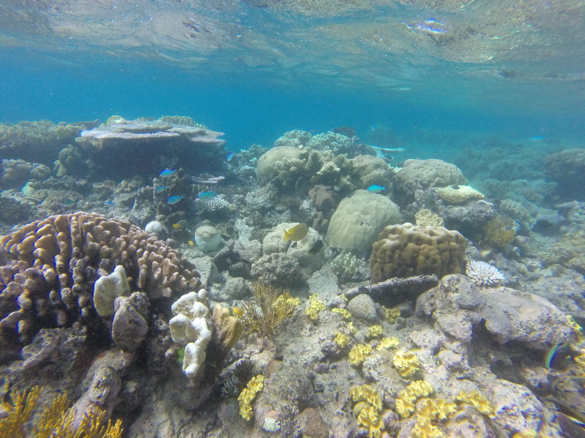 Cairns (Day 81): Great Barrier Reef
