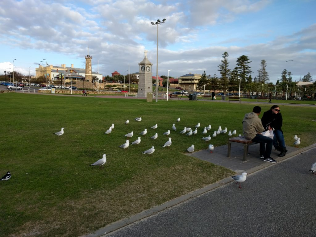 Pretty Australian Seagulls crowding around anyone with food.