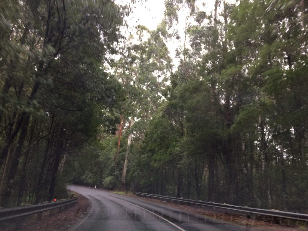 Stretches of the Great Ocean Road are just forest