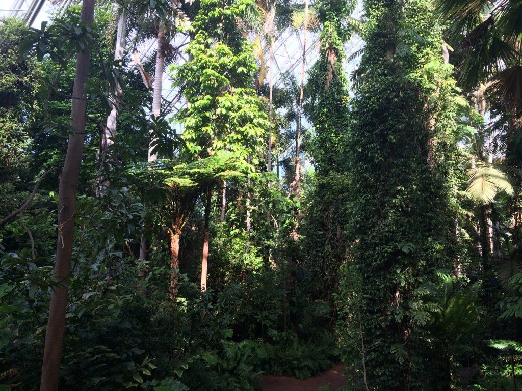 Inside the rainforest house