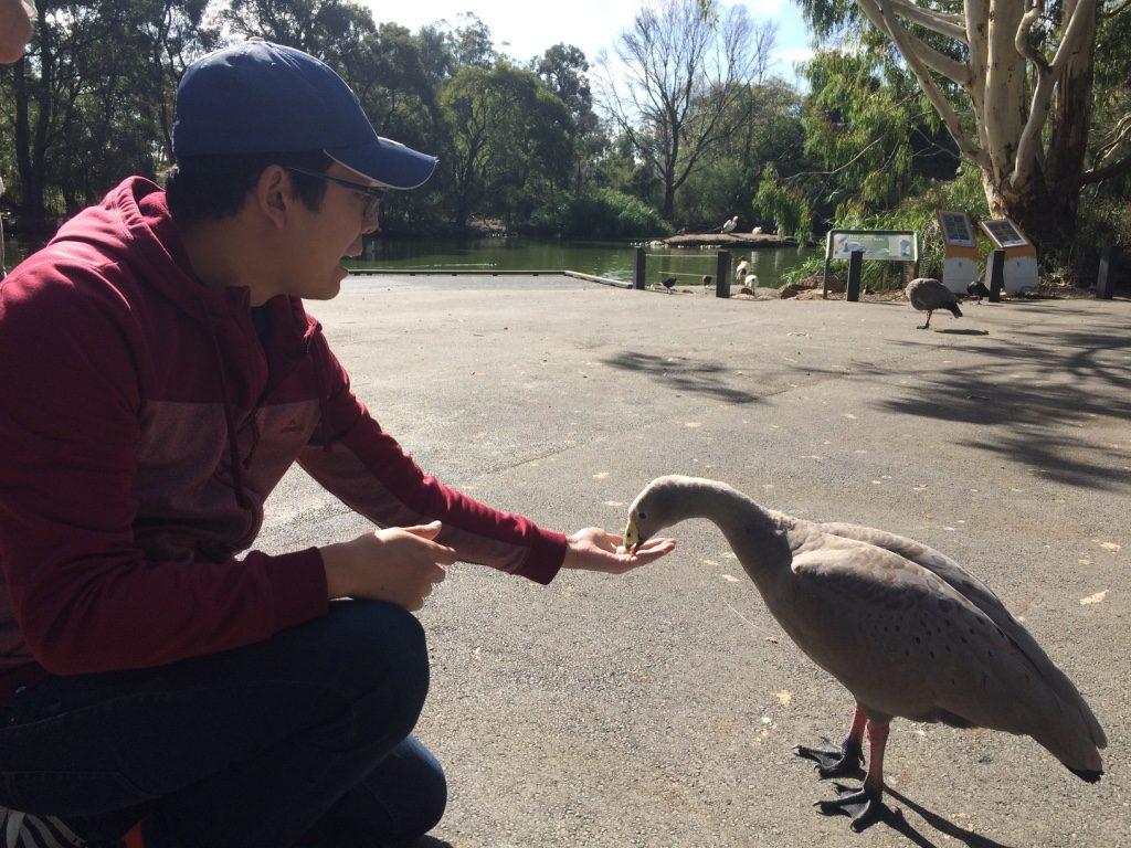 Tim feeding a Cape Barren Goose