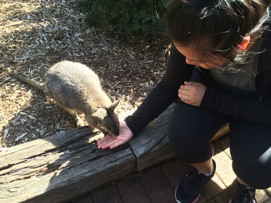 Me feeding a baby wallaby