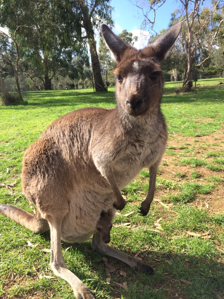 Adelaide (Day 78): Cleland Wildlife Park and Hahndorf
