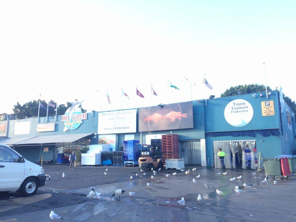Ibises and seagulls everywhere