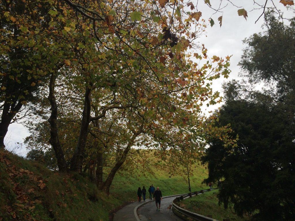 The walk up to Mt Eden summit