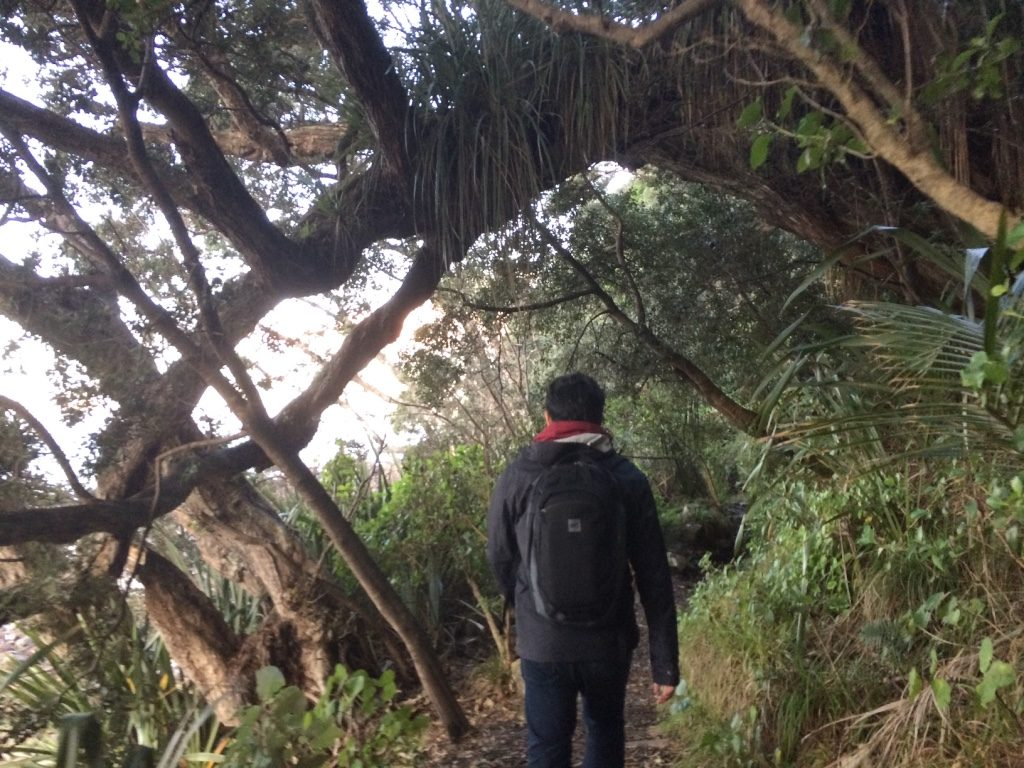 On the trail at Pauanui Beach