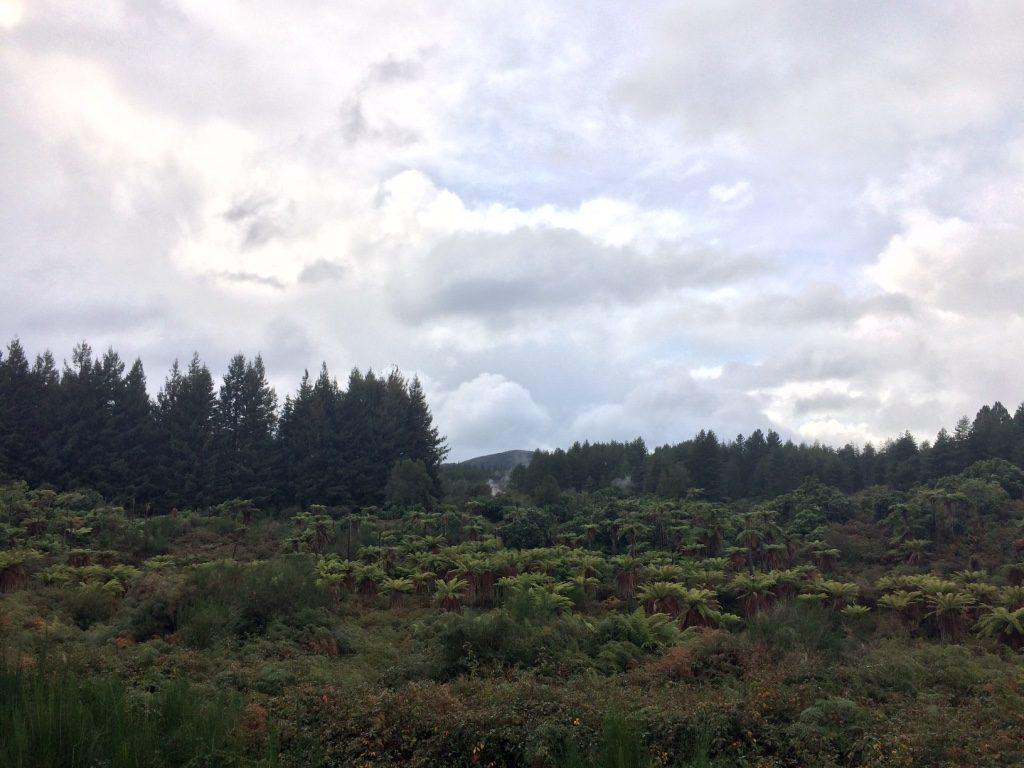 Waiotapu area looks like Jurassic Park could be filmed here with the geothermal steam and all the fern like trees