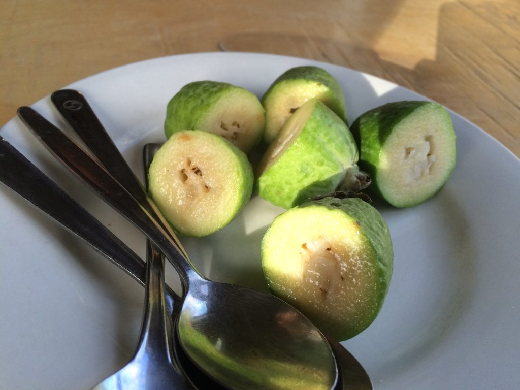 Feijoas (fruit) free at Kiwi Paka. They were tart and had similar gritty texture as a guava