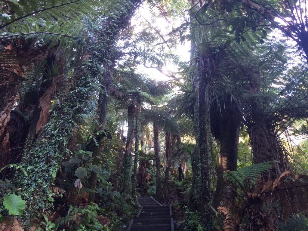 Walking through the Waitomo trail