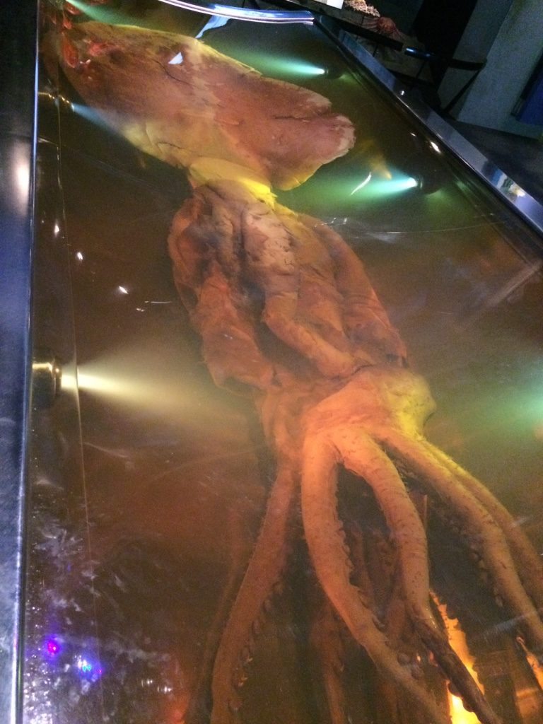 Colossal squid at Te Papa